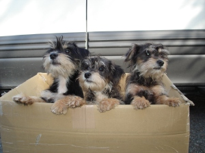 Puppies from shelter