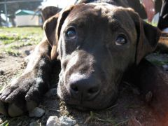 puppy9