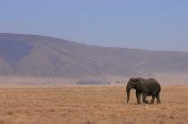 Elephants as they should be...