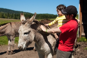 Luciano and Fernando Cuenca and Donkey Margarita