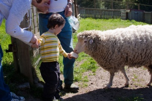 Luciano and Miranda the sheep (courtesy of the Cuenca family.)