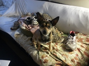 Choco and her shoe pile