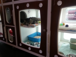 Cat Condos at SAS