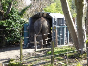 Bamboo in transport crate at WPZ (Photo by Jeanne Barrett)